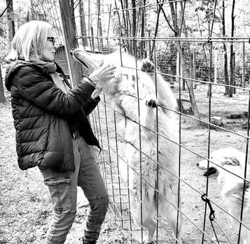 Wolfdog Rescue