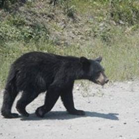 wildlife obsrvation.jpg