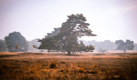Lüneburger-Heide-1.jpg