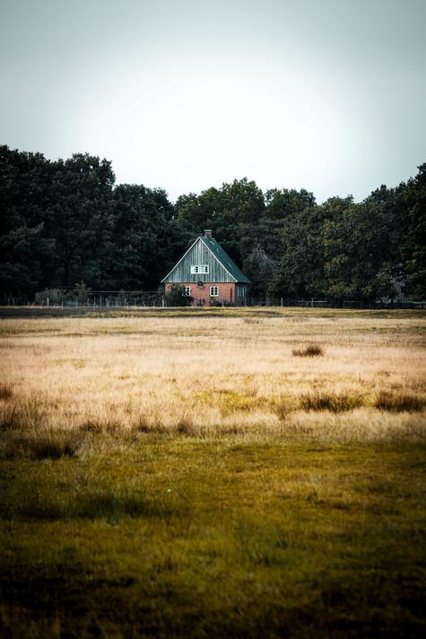 Lüneburger-Heide-2.jpg