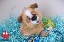 Puppy Shurik