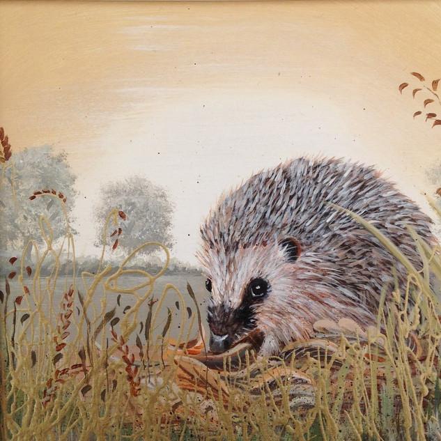 Hedgehog I SOLD