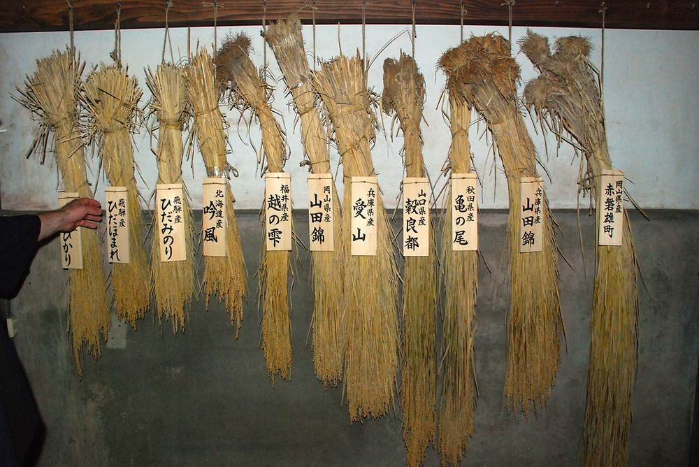 Bundles of rice, each appearing slightly different, hang with wooden boards displaying their names in Japanese