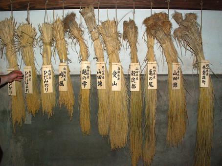 KANPAI! October 1st is World Sake Day