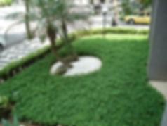 grama amendoim em bauru04.jpg