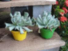 Vasos de Suculentas na Império das Plantas em Bauru