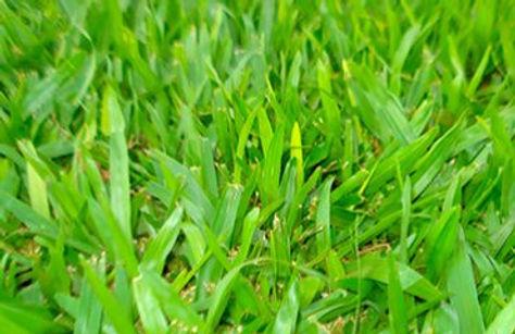 grama batatais em bauru 05.jpg