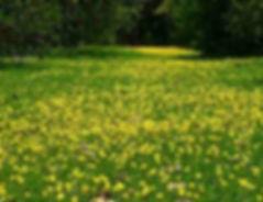 grama amendoim em bauru 01.jpg