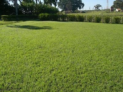 grama batatais em bauru 01.jpg