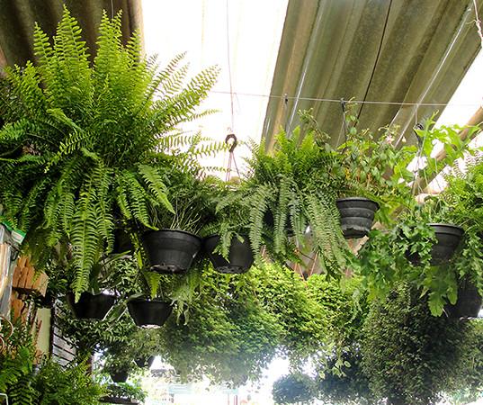 Plantas Ornamentais na Império das Plantas