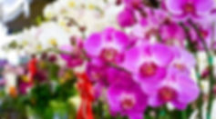 Orquide-em-Bauru-05.jpg