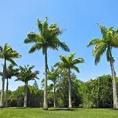 Palmeira Imperial.jpg