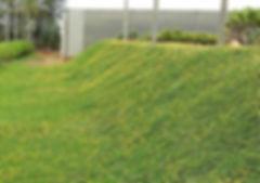 grama amendoim em bauru 03.jpg