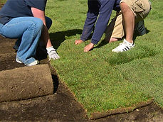 grama esmeralda em bauru plantio.jpg