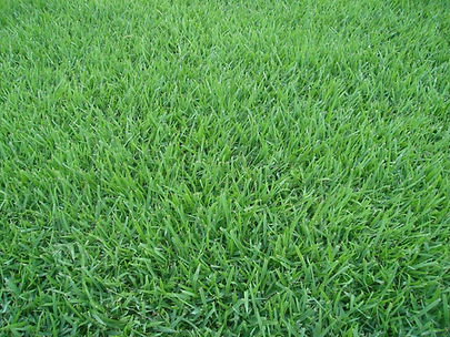 grama esmeralda em bauru 01.jpg