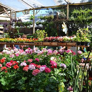 Tudo para o seu Jardim aqui em Bauru