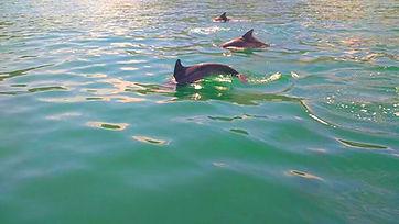 Golfinhos em Angra dos Reis, Rio de Janeiro