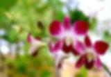 Orquide-em-Bauru-06.jpg