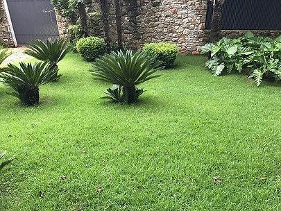 grama esmeralda em bauru no jardim.jpg