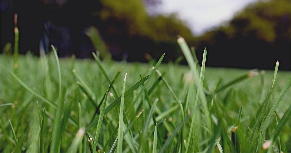 Grass%20Close%20Up_edited.jpg