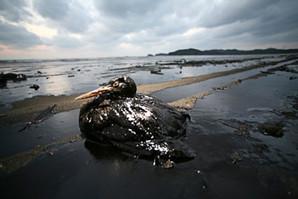Maree noire Coree.jpg