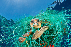 Turtle bycatch.jpg