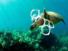 Pollution plastic Tortue