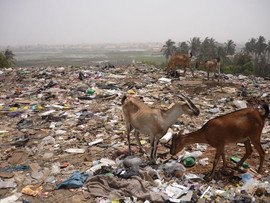 Pollution plastic vs animaux.jpg