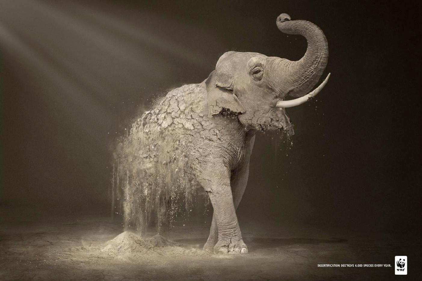 wwf-publicite-elephant.jpg