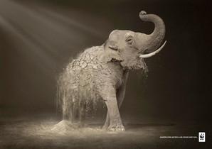 WWF publicite elephant.jpg