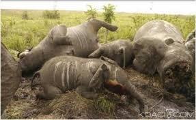 Massacre ivoire