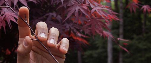 sk maple twig fingers smaller.jpg