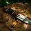 Thumbnail: Damascus Steel Hunting Knives