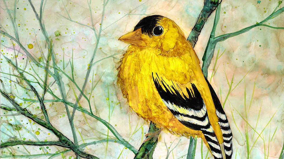 Golden Finch : Prints