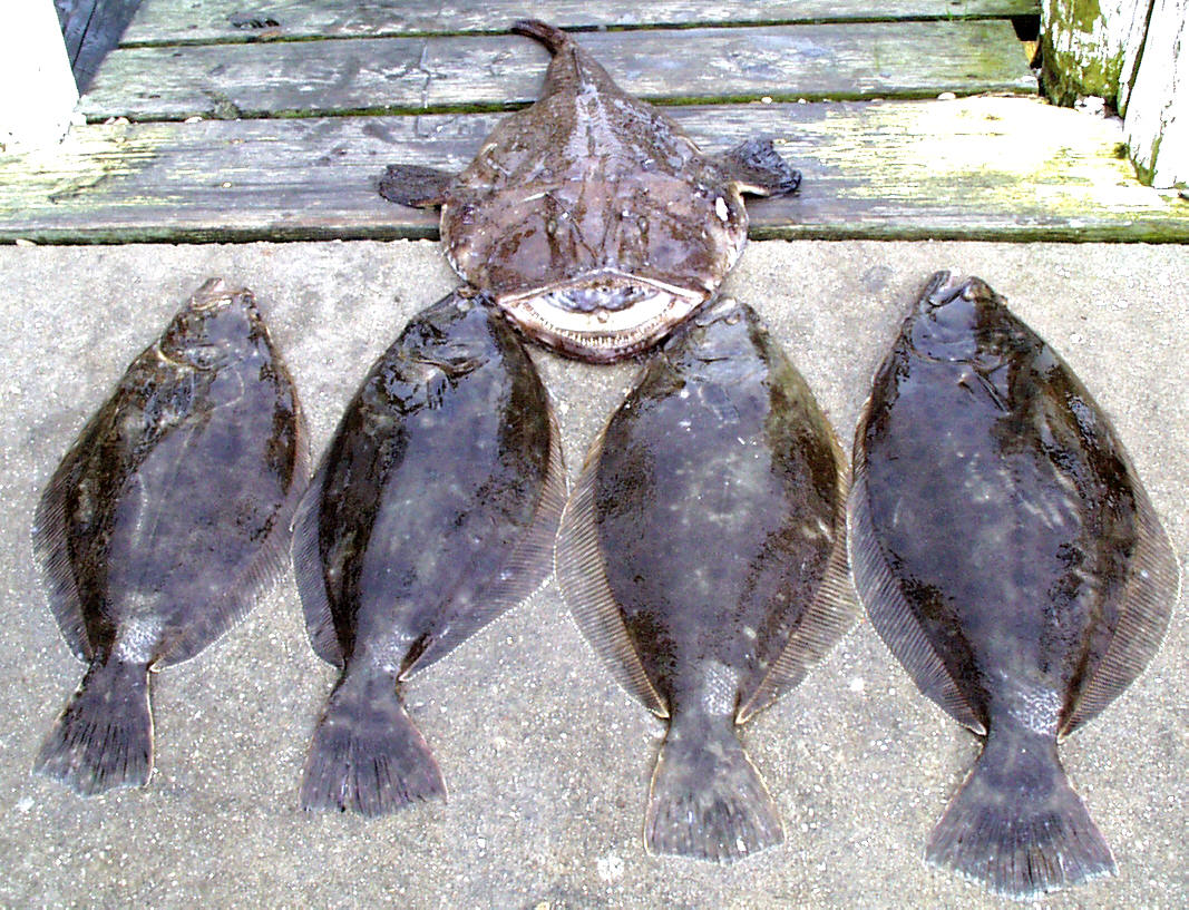 MONKFISH with FLUKE up to 8lbs