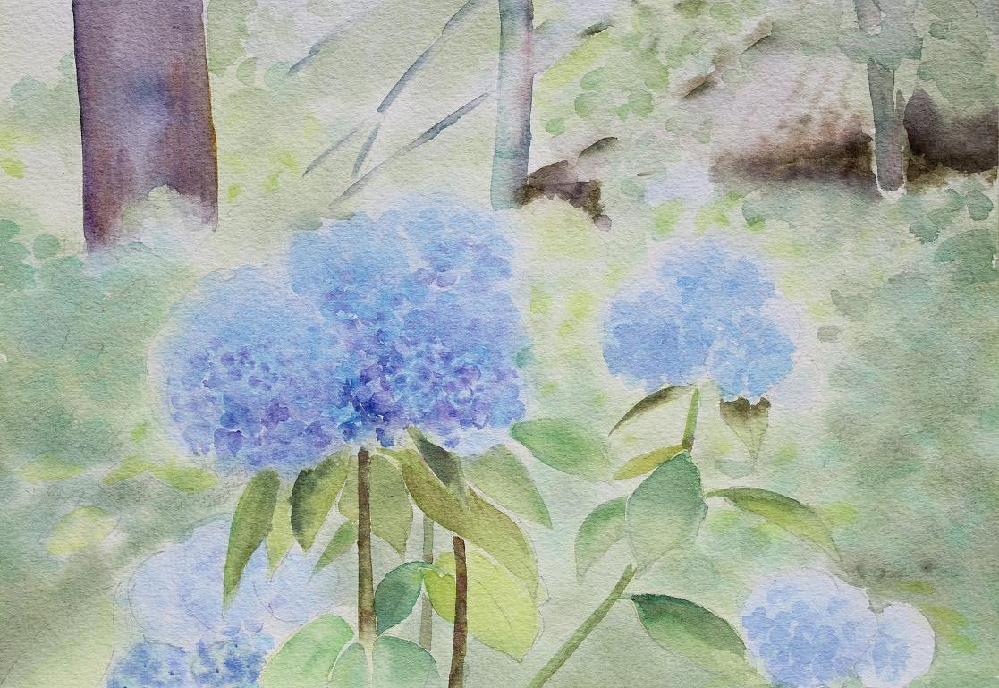 紫陽花(天引観音)