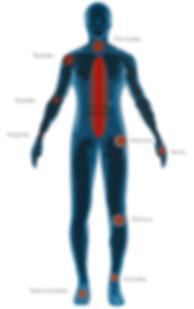 La PST regénère l'arthrite, l'ostéoporose, les fractures de stress et les traumatismes reliés aux accidents, au travail et aux sports.
