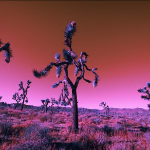 Do You Know Where to Find Elmer's Tree? (Hint: Joshua Tree!)