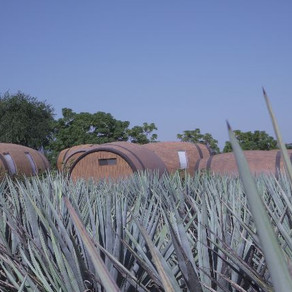 5 Cities Tequila Lovers Must Visit in Jalisco, Mexico