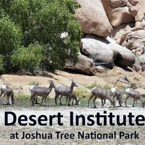 The Desert Institute at Joshua Tree has New Classes in November
