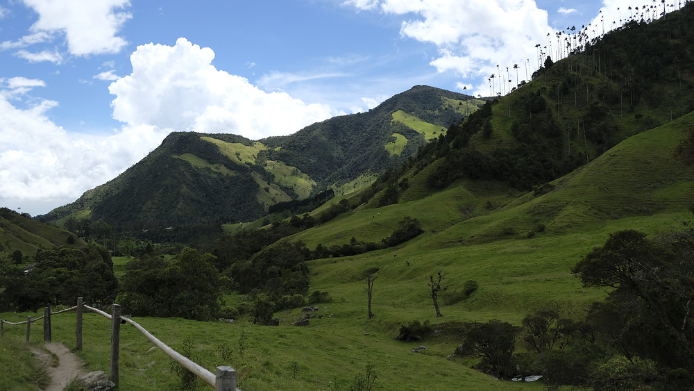 Valle de Cocora Salento in Colombia