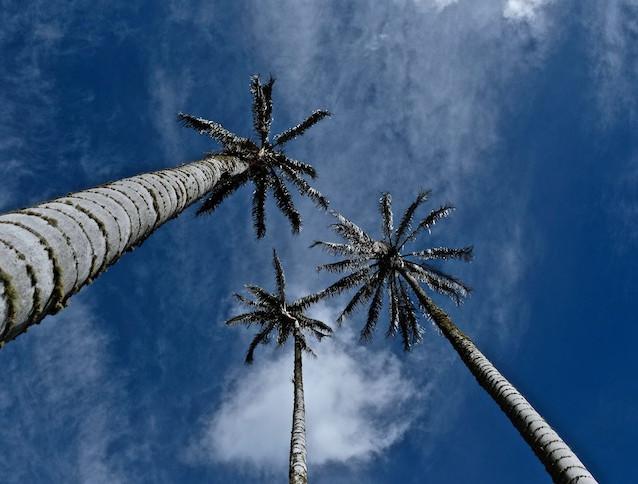 SalentoTrees.jpg