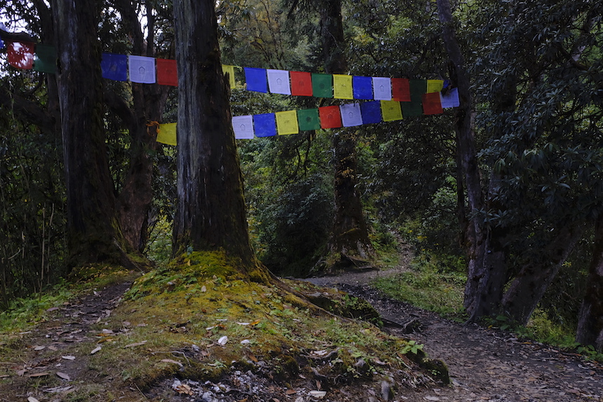 PoonHill Trek in Nepal