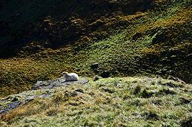 Minerstrack Pygtrack Snowdonia.jpg
