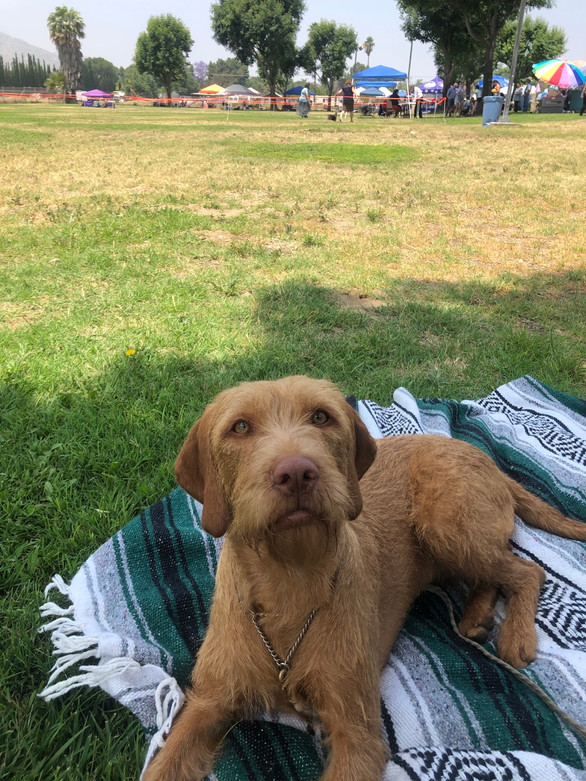 Rheese relaxing at her first show