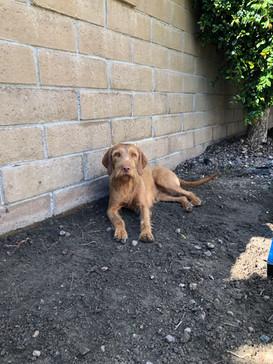 Garden supervisor, Rheese