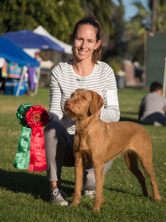 Rheese earned her UKC Champion title in November 2019 with a Group 2!