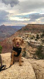 Grand Canyon Rheese