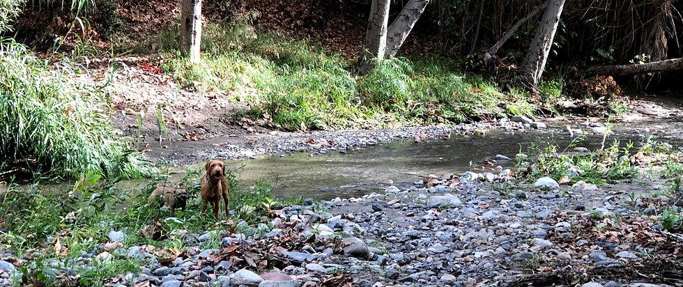 Rheese by the creek