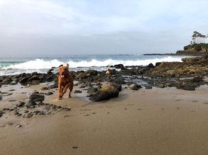 We love beach days!
